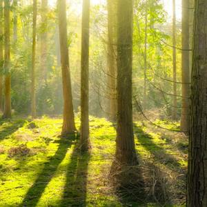 Small square bright daylight environment forest 240040